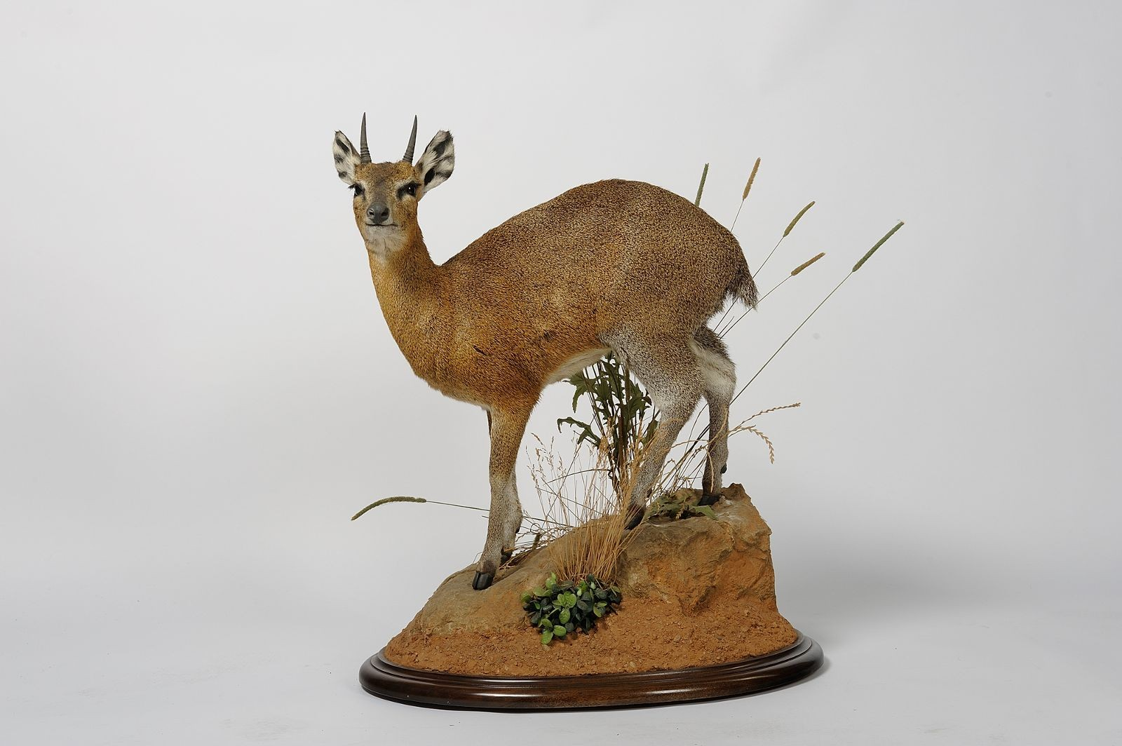 taxidermie 63