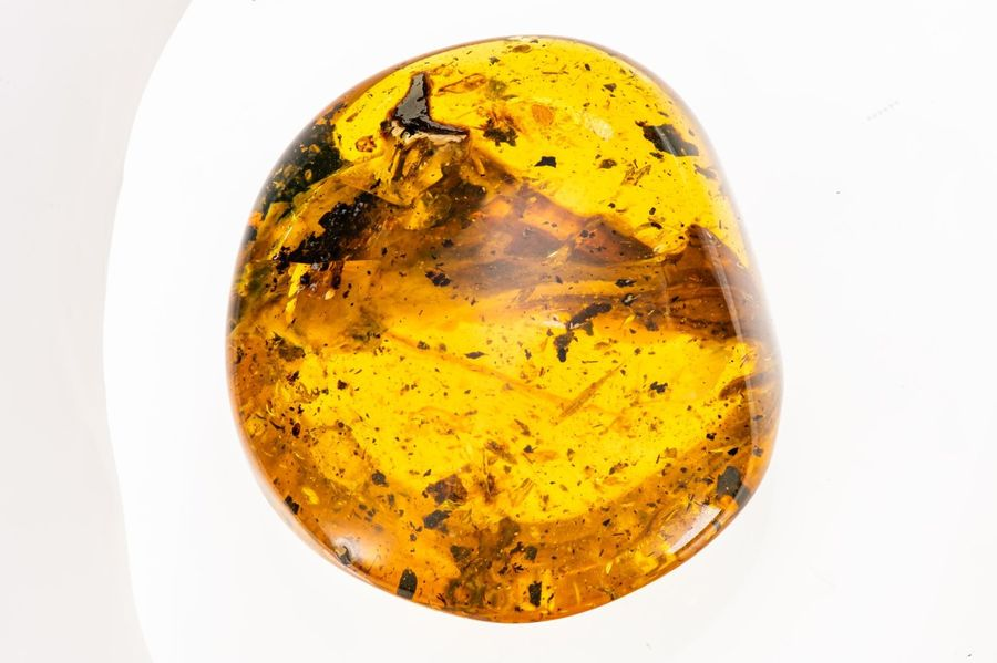 Natural History: An extremely rare and possibly unique amber specimen containing…