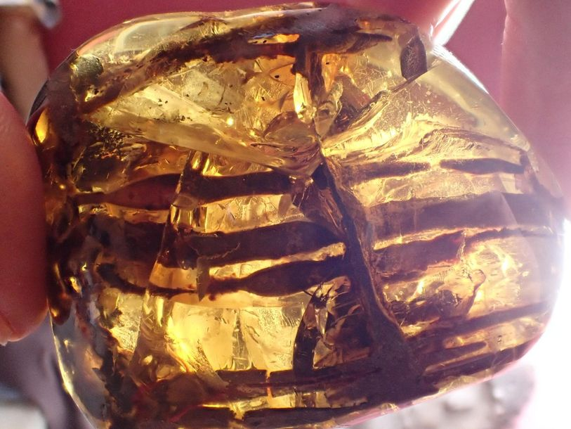 Natural History: An amber specimen containing the remains of a cretaceous plant…