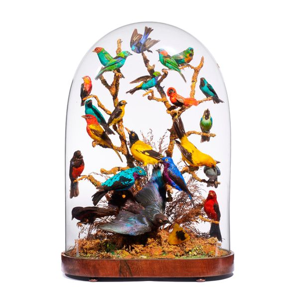 Taxidermy: A Victorian glass dome with tropical birds, late 19th century,74cm high…