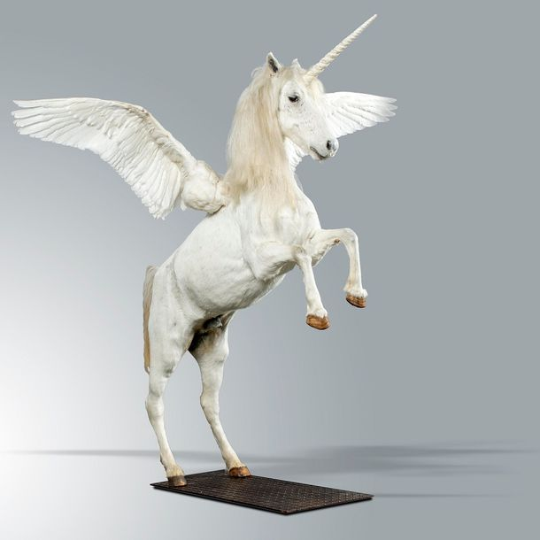 Taxidermy: An impressive mounted Pegasus, modern, made-up of pony skin and swan…
