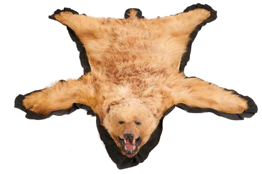 Taxidermy: A Grizzly bear skin, early 20th century, 200cm by 169cm