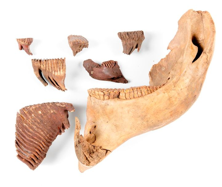 Natural History: A collection of mammoth teeth, Siberia, Ice Age