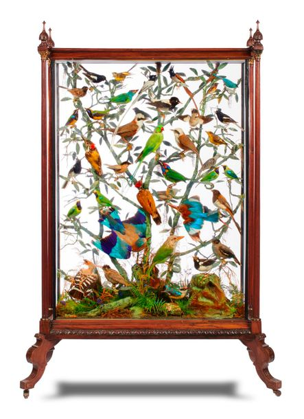 Taxidermy: A magnificently appointed and highly ornate rosewood case by the celebrated…