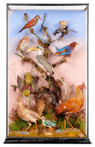 Taxidermy: Williams of Dublin: A mixed tropical bird case, circa 1890, label to…