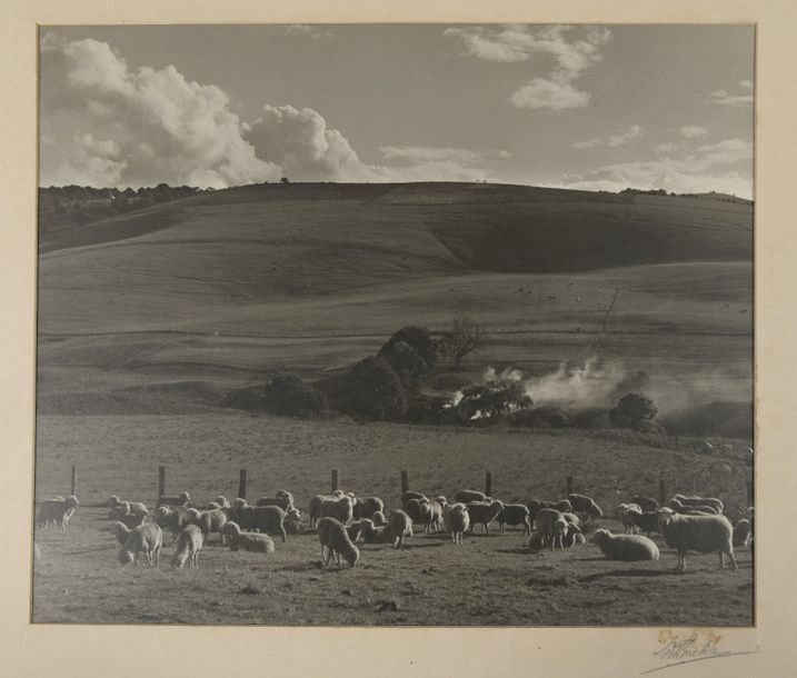 W.G. BUCKLE (1894 1947) Photographie de campagne australienne, «Kangaloon Pastor…