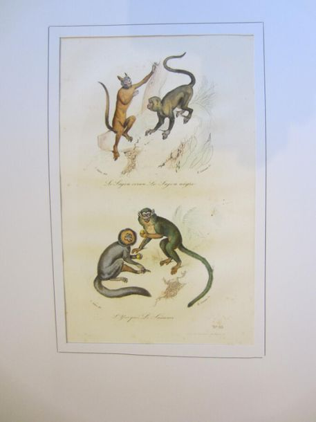 ANIMAUX Lot d'environ 100 planches, gravures, lithographies